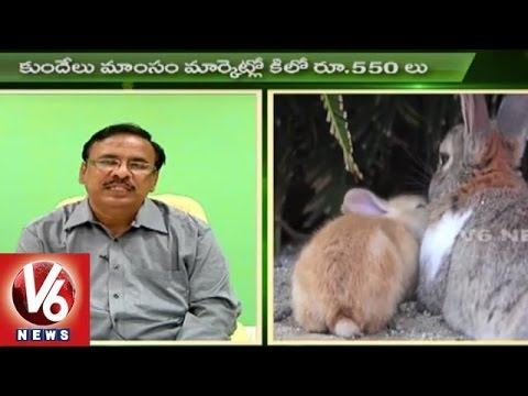 Sagubadi | Rabbit Farming Techniques | Rabbit Meat | Agriculture News l V6 News