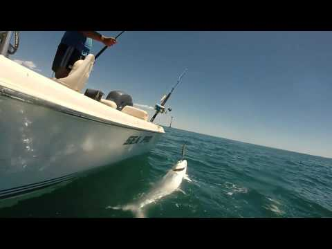 Port Hedland Fishing, Mackies GTs Queens and Mullaway