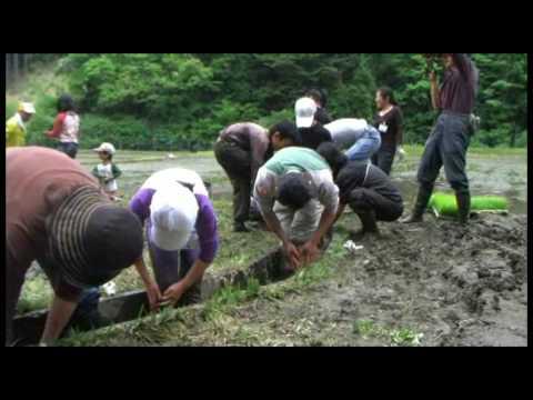 ハンサムガーデン田植体験2009年5月24日