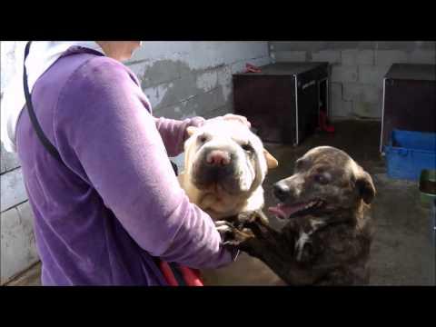 Dogshelter La Linea: Honny, Carusso, Kloens and Sarpi