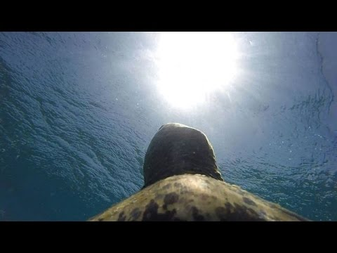 'Turtle cam' highlights threat to Australia's Great Barrier Reef
