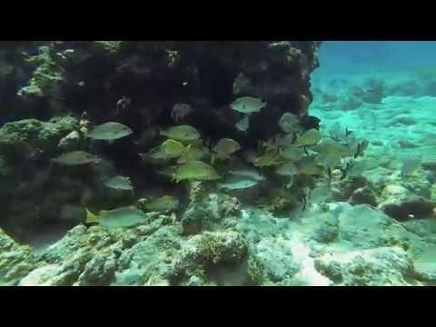 2014 Snorkeling In Grand Cayman   Gopro Hero 3 Black