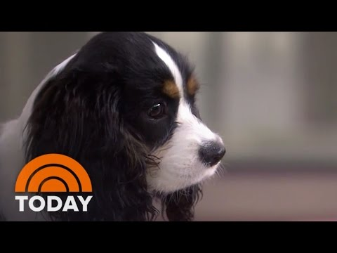Olivia Munn Brings Her Dog 'Chance' To Interview | TODAY
