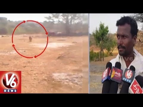 Dandumailaram Villagers In Panic Situation With Cheetah Attack | Ranga Reddy | V6 News