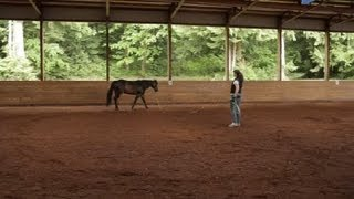 How to Get My Horse to Canter on the Lunge Line : Equestrian Information