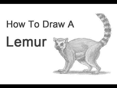 How To Draw A Ring Tailed Lemur YouTube