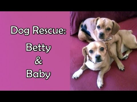 Rescuing two abandoned dogs, Betty and Baby - Please share.  Thanks!