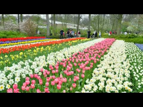 Keukenhof - Garden of Europe