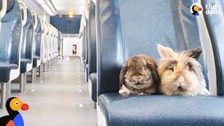 Bunnies Have The Best Lives And Go On Amazing Adventures - SUMBA & BURNY | The Dodo