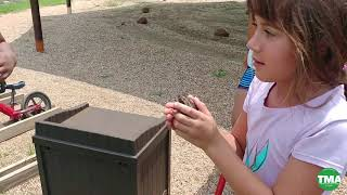 Camp TMA-What happens when you find a toad?