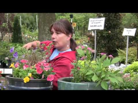Container Gardening with Flowers, Annuals, Perennials and  Herbs