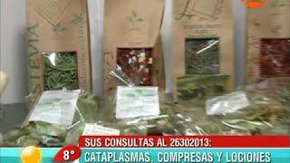 Hierbas Medicinales  Chilenas Entrevista  Fitoterapeuta Hernan Silva
