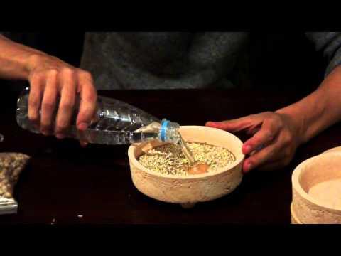 Проращиватель семян сделать своими руками