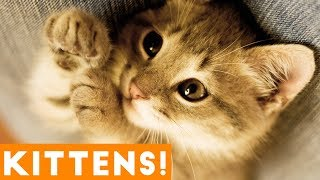Cutest Kitten Video Compilation of June 2018 | Funny Pet Videos