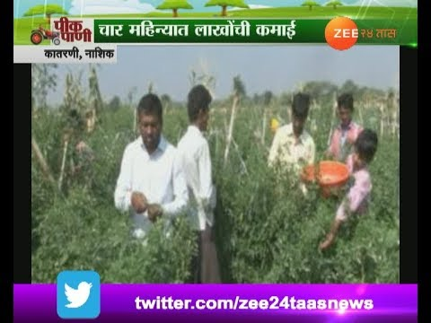 Peekpani | Nashik | Katrani | Farmer Got Chili Pepper Production Step By Step Got Profit In Farming