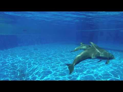 Dazzle's New Dolphin Calf
