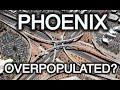 Warning: Phoenix Arizona Becoming OverPopulated?