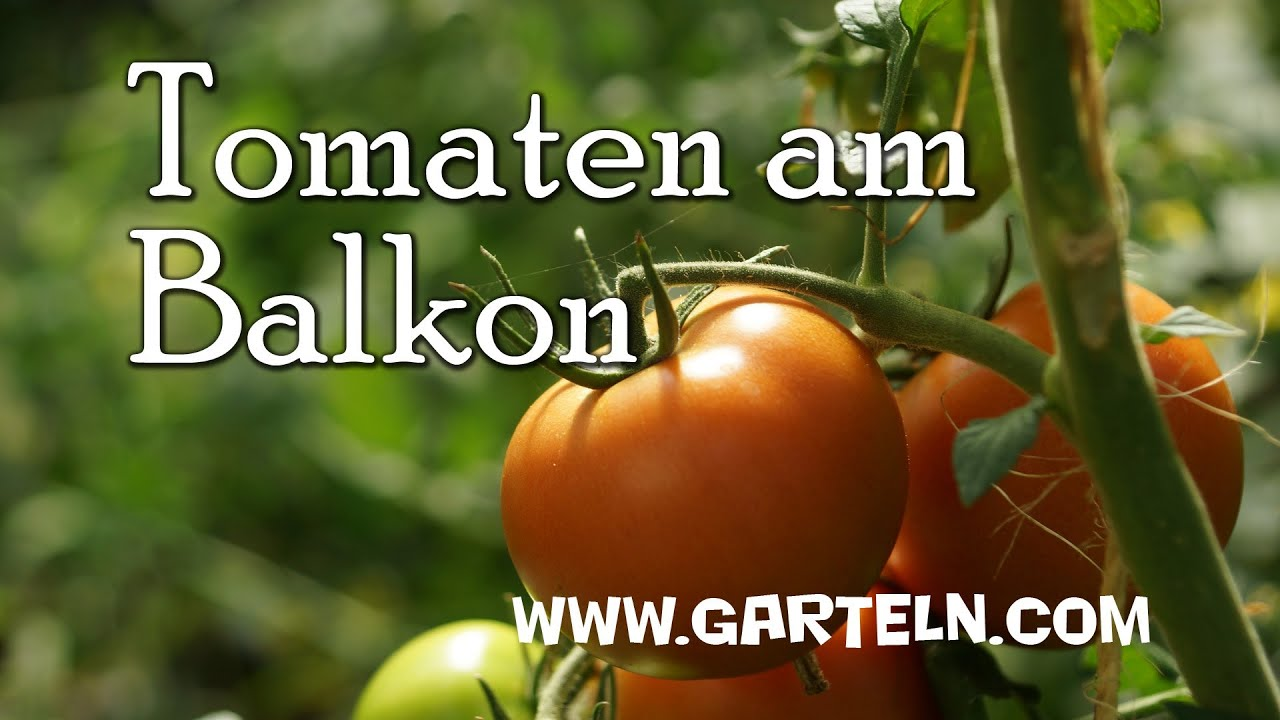 tomaten am balkon oder auf der terrasse anpflanzen youtube. Black Bedroom Furniture Sets. Home Design Ideas