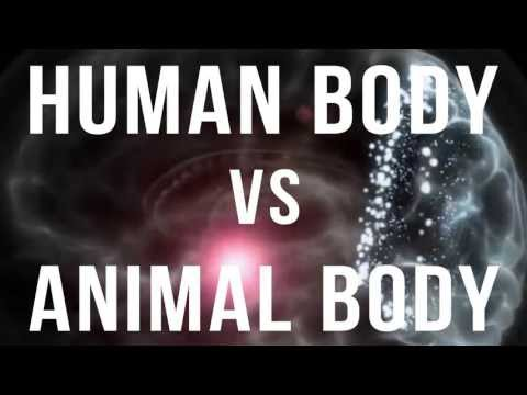 Human Body vs Animal Body