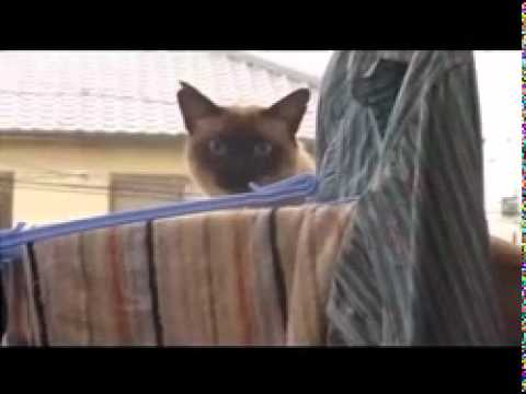 Cat Jump Fail with Music: Sail by AWOLNATION