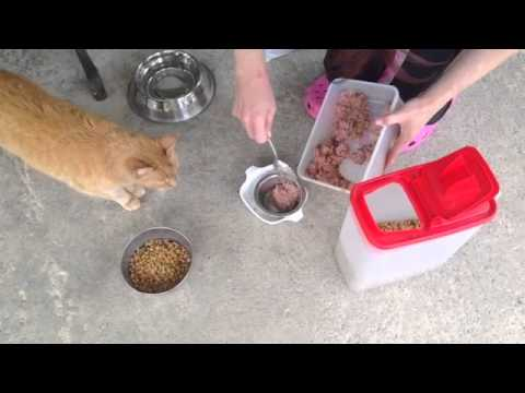 Cat Loves Food Cat Loves Food by Yamcha And