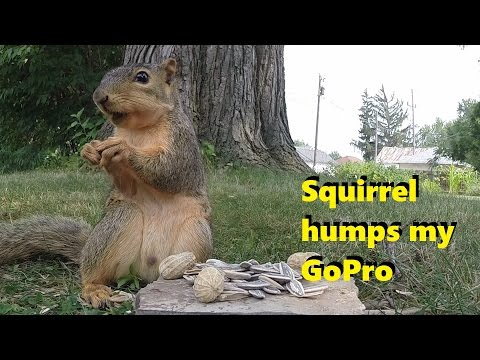 Squirrel has romantic moment with video camera