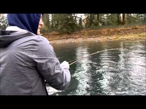 Cowlitz River Silver Salmon Fishing 2014