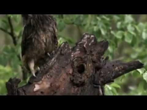 Seabear - Owl Waltz