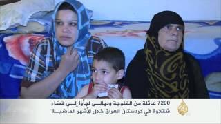 7200 عائلة من الفلوجة وديالى لجأت إلى قضاء شقلاوة