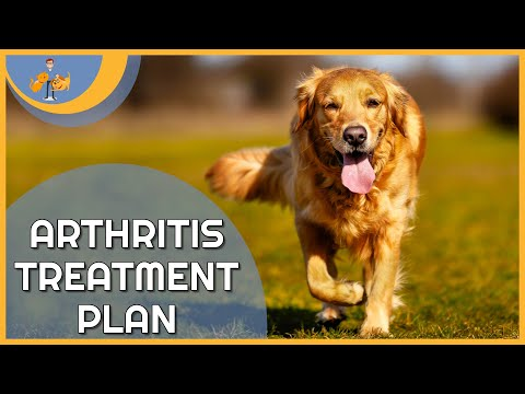 Download Lagu Treating Arthritis in Dogs - a plan to keep them pain free!.mp3