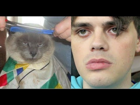 Internet Animal Impressions 2! | crabstickz