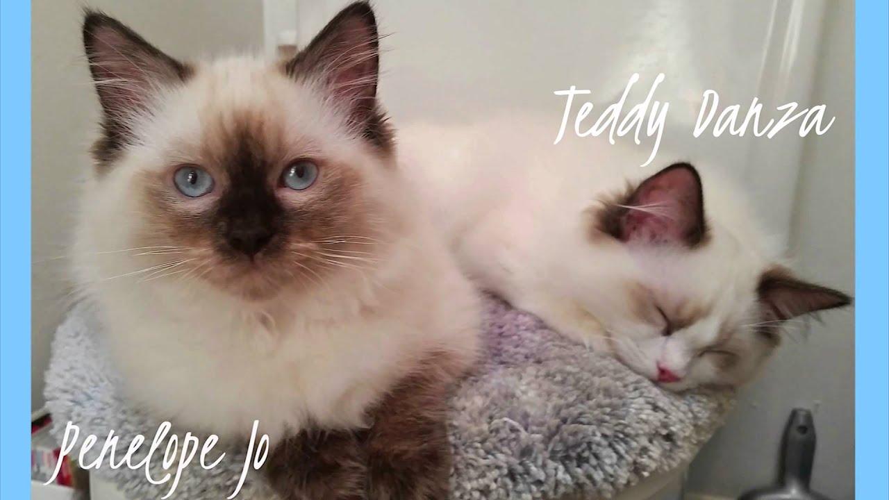 Cat spay neuter grants