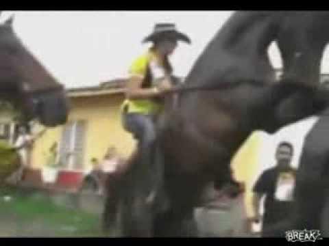 Cavalo tenta comer a égua errada