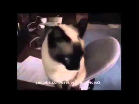 Ржач! Кошки зевают!