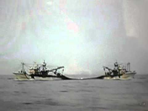 九十九里 巻き網漁