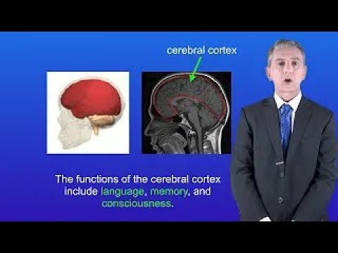 GCSE Science Biology (9-1 Triple) The Brain