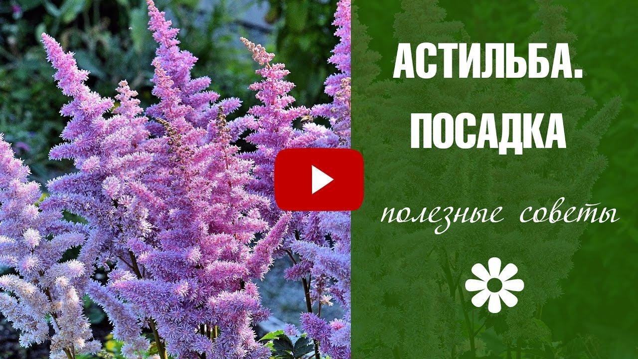 Уход за цветами как посадить