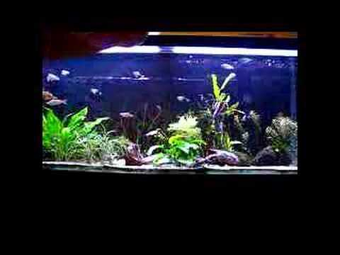 Freshwater aquarium 75 gallon rainbowfish youtube for Aquarium decoration ideas cheap