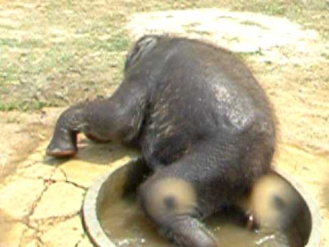 baby elephant taking a bath in a drinking basin youtube. Black Bedroom Furniture Sets. Home Design Ideas