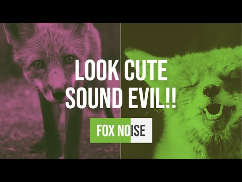 Fox Noise - Fox shriek/call/cry/mating call, whatever the hell you want to call it...