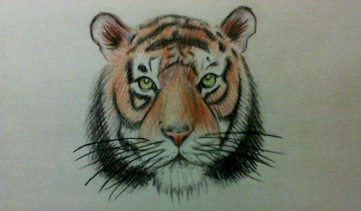 Line Drawing Of A Tiger S Face : How to draw a simple tiger face easy watercolor pencils
