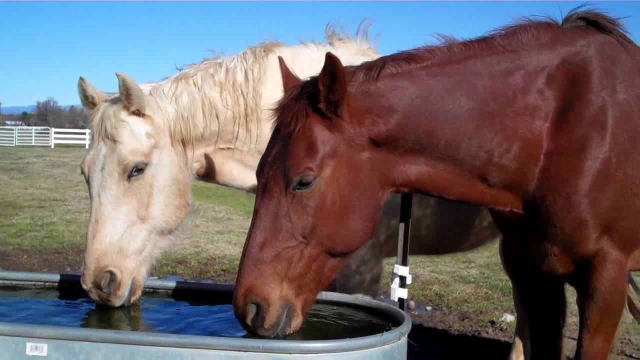 How Do Horses Drink Water