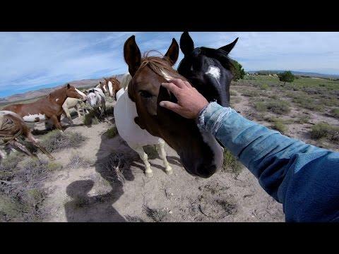 видео ловля диких лошадей