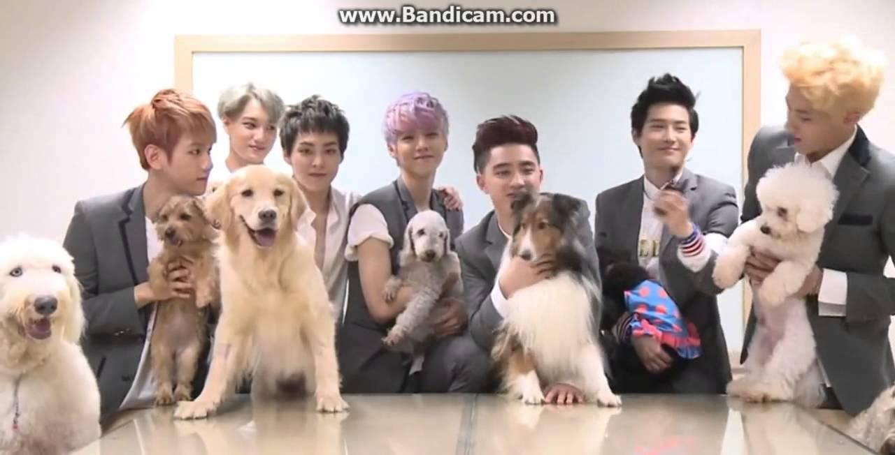 Exo Kai Dog Name