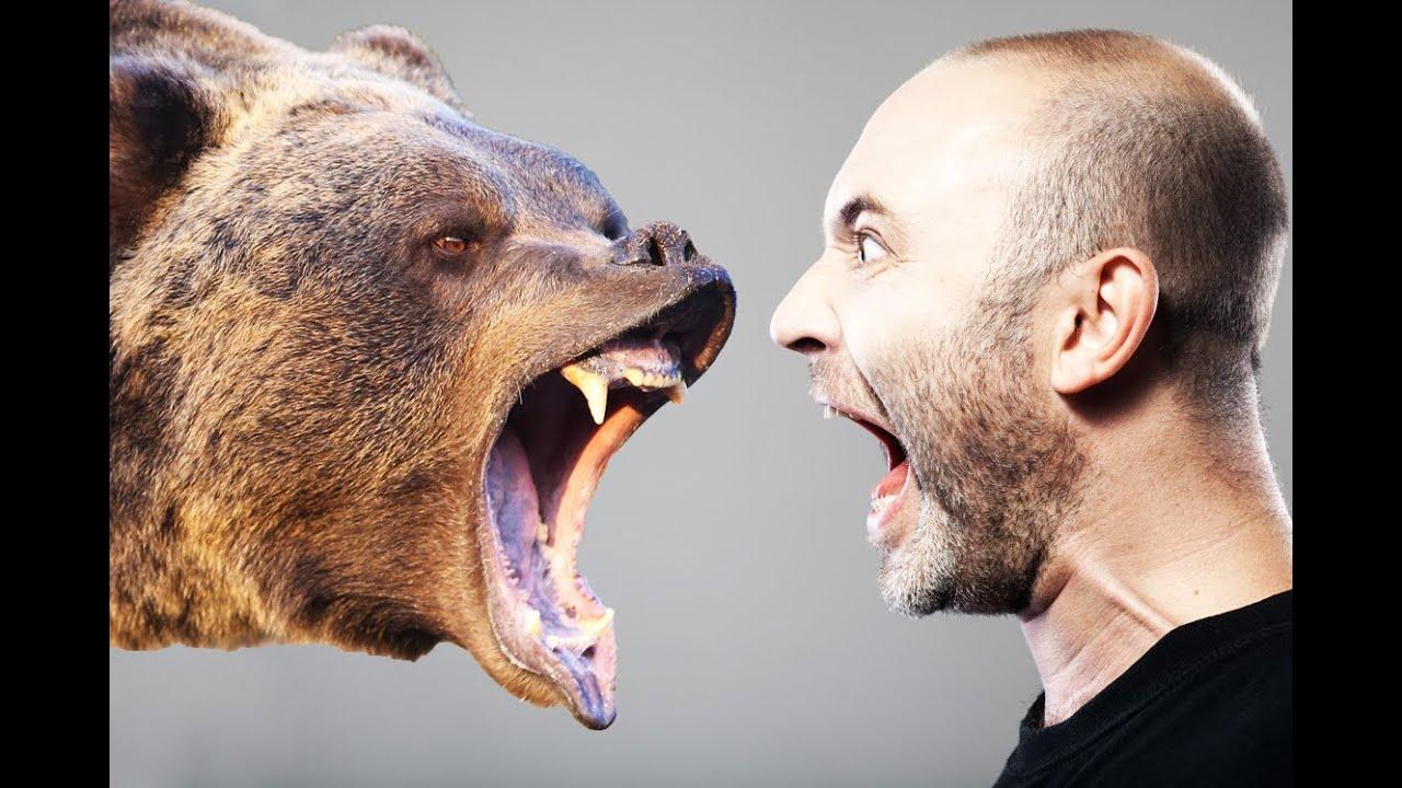 Lion bites human