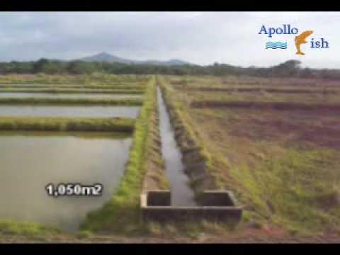 Cultivo de peces youtube for Cuidado de peces