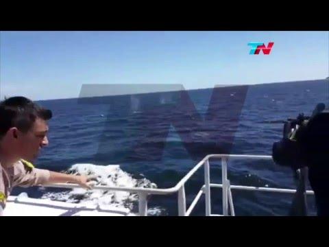 Disparos y persecución en alta mar: un buque chino pescaba ilegalmente
