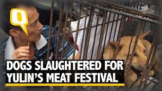 The Quint: Thousands of Dogs Slaughtered for Yulin's Dog Meat Festival