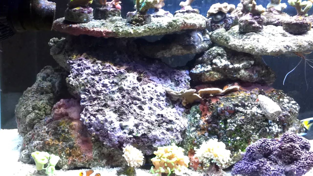 aquarium eau de mer r 233 cifal blau 300 litres