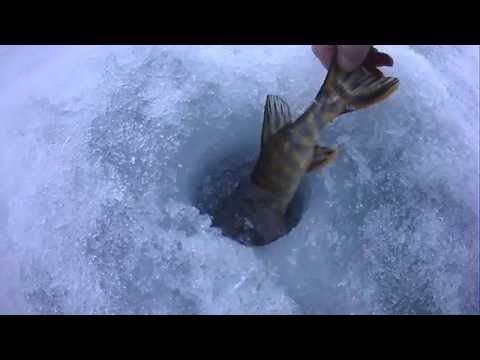 атака щуки под водой на блесну